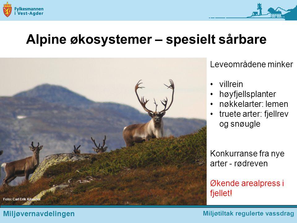Alpine økosystemer – spesielt sårbare