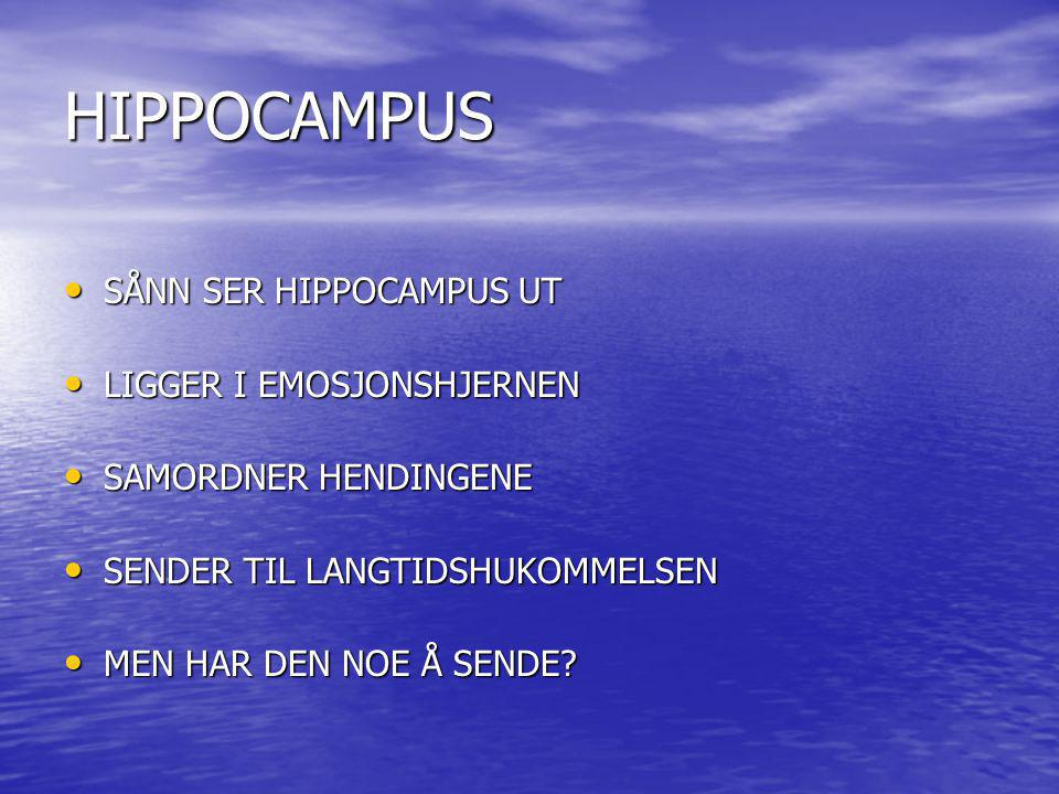 HIPPOCAMPUS SÅNN SER HIPPOCAMPUS UT LIGGER I EMOSJONSHJERNEN