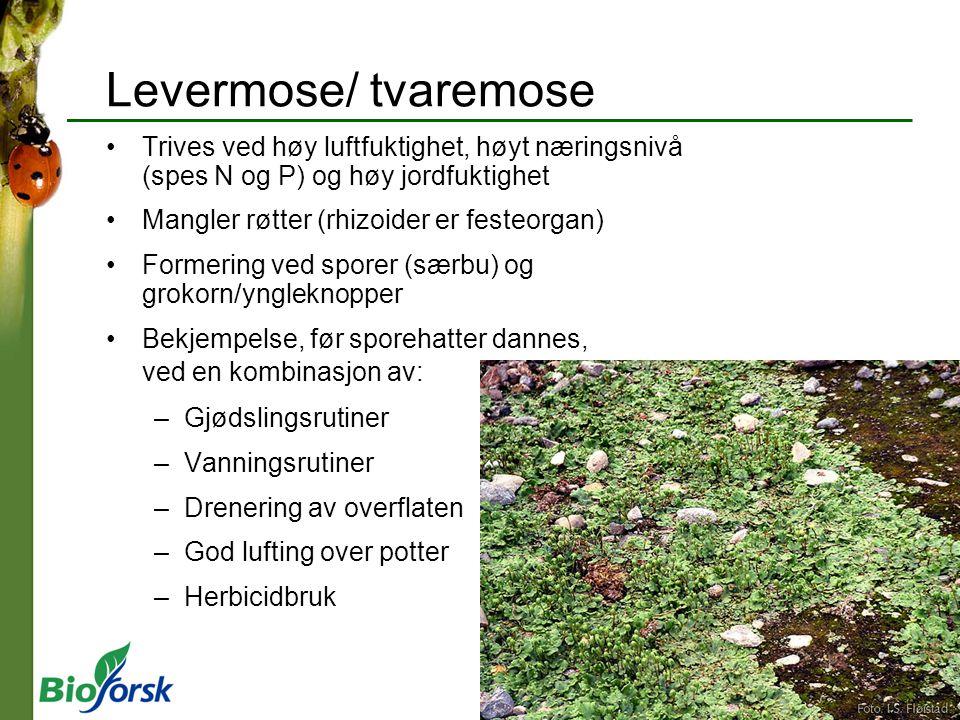 Levermose/ tvaremose Trives ved høy luftfuktighet, høyt næringsnivå (spes N og P) og høy jordfuktighet.