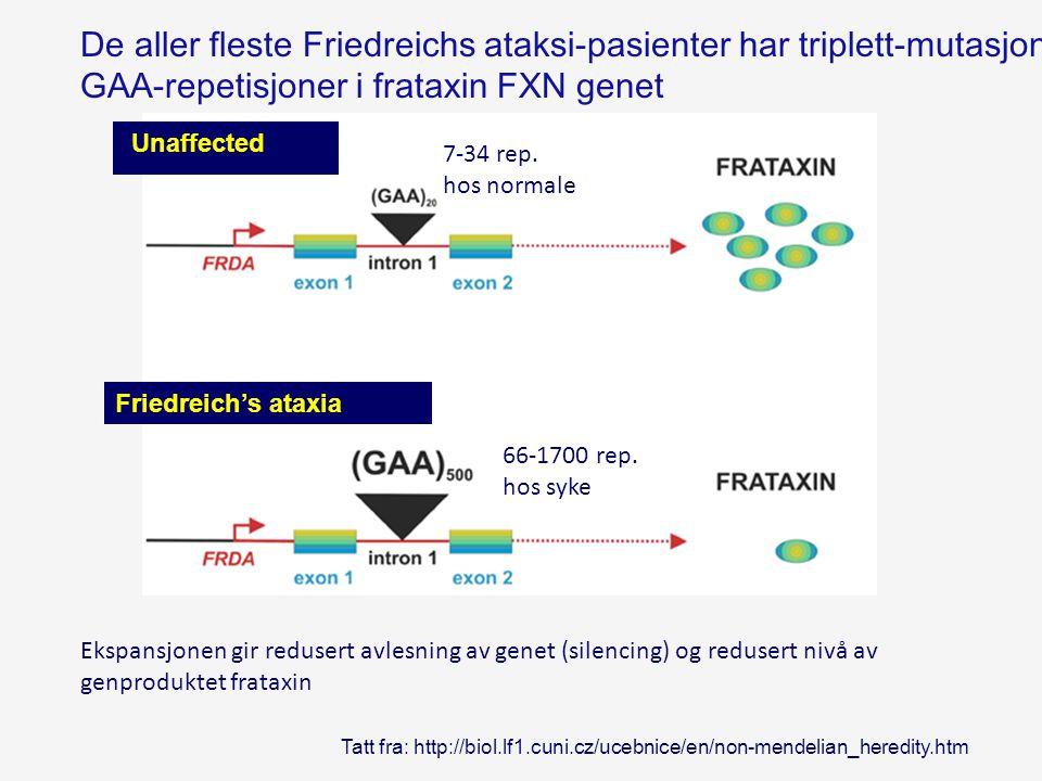 GAA-repetisjoner i frataxin FXN genet