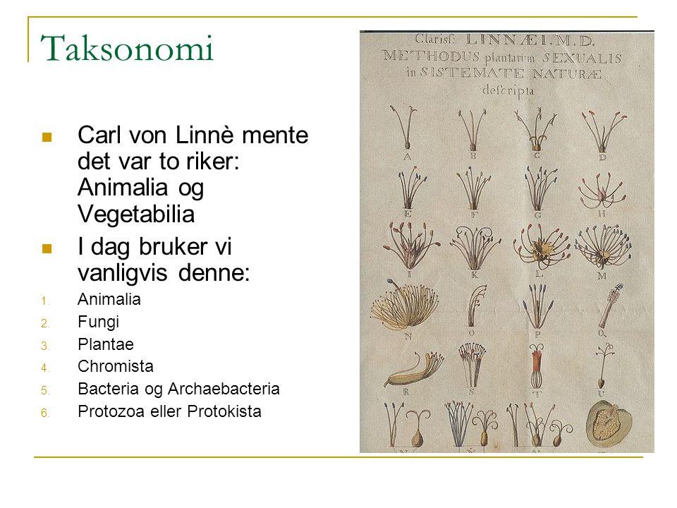 Taksonomi Carl von Linnè mente det var to riker: Animalia og Vegetabilia. I dag bruker vi vanligvis denne: