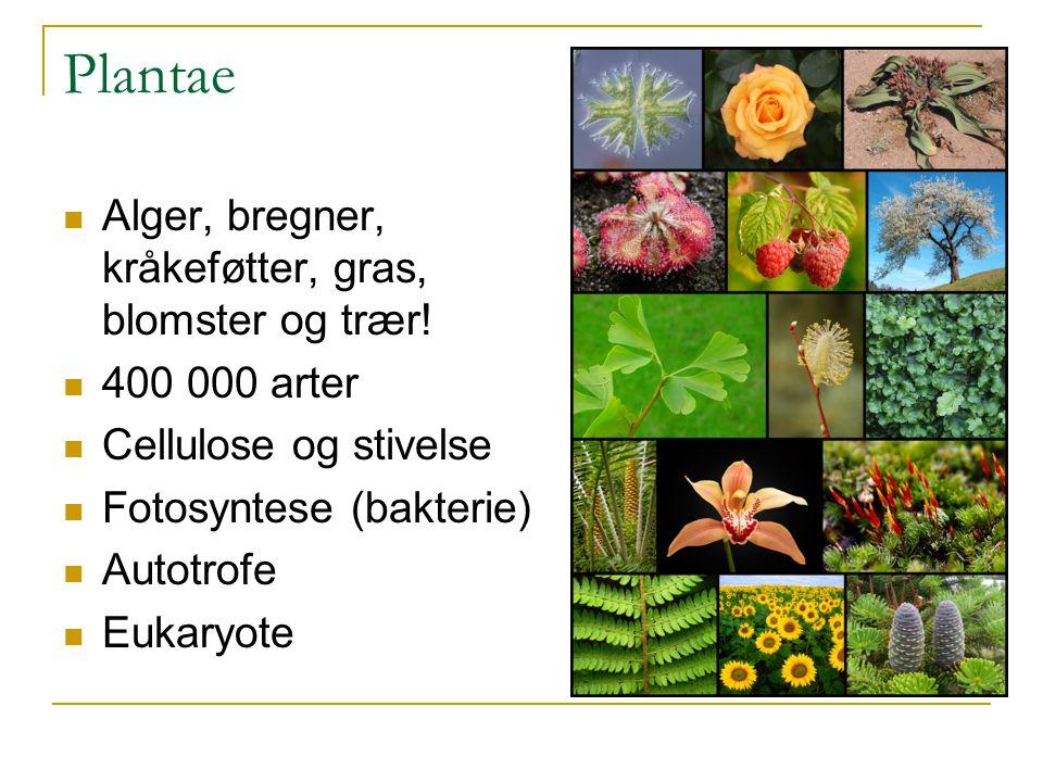 Plantae Alger, bregner, kråkeføtter, gras, blomster og trær!