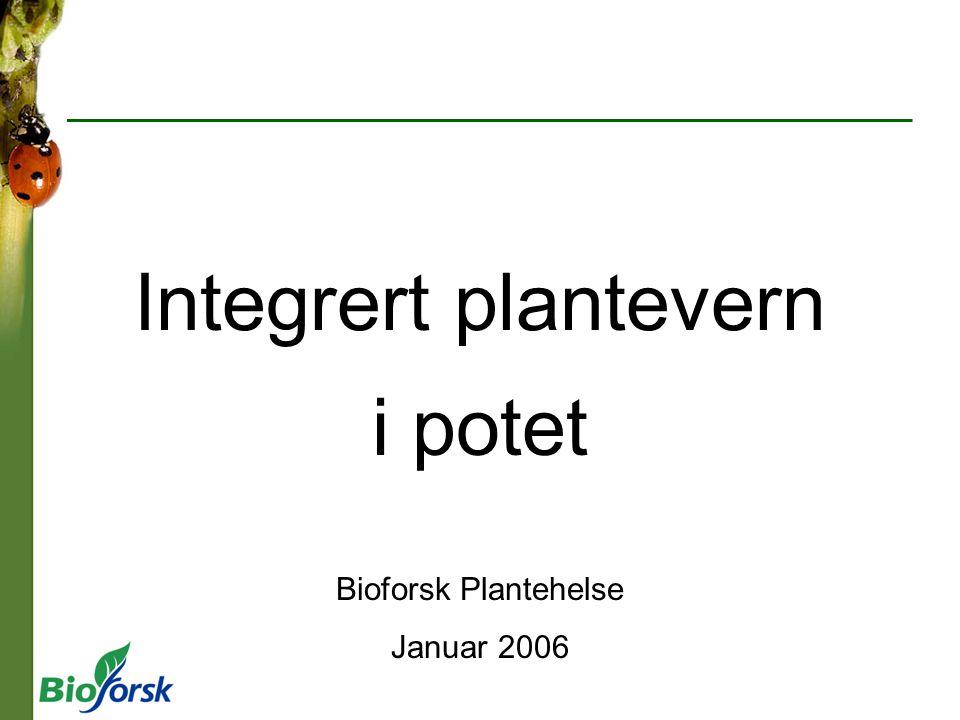 i potet Bioforsk Plantehelse Januar 2006