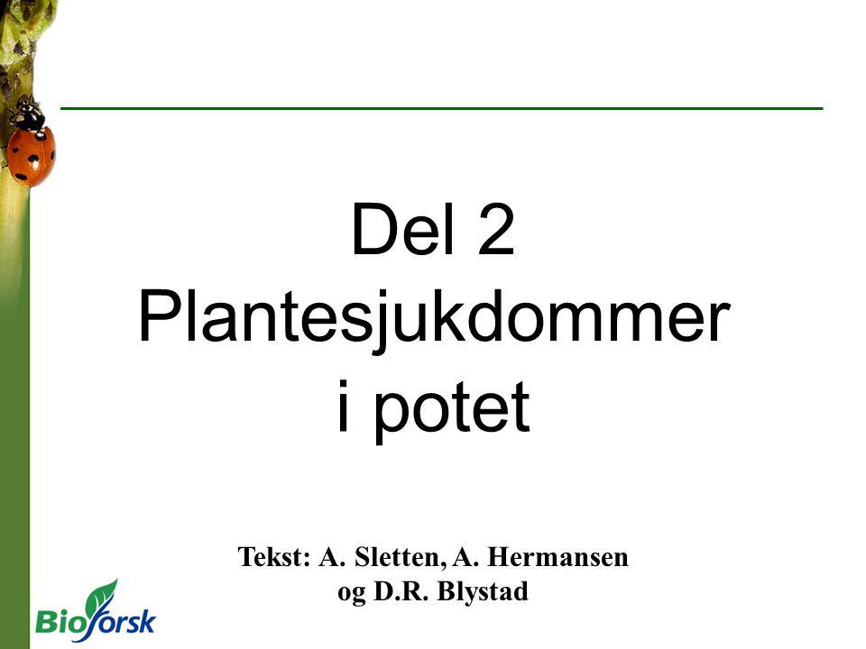Tekst: A. Sletten, A. Hermansen og D.R. Blystad