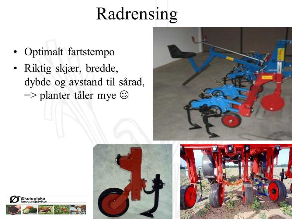 Radrensing Optimalt fartstempo