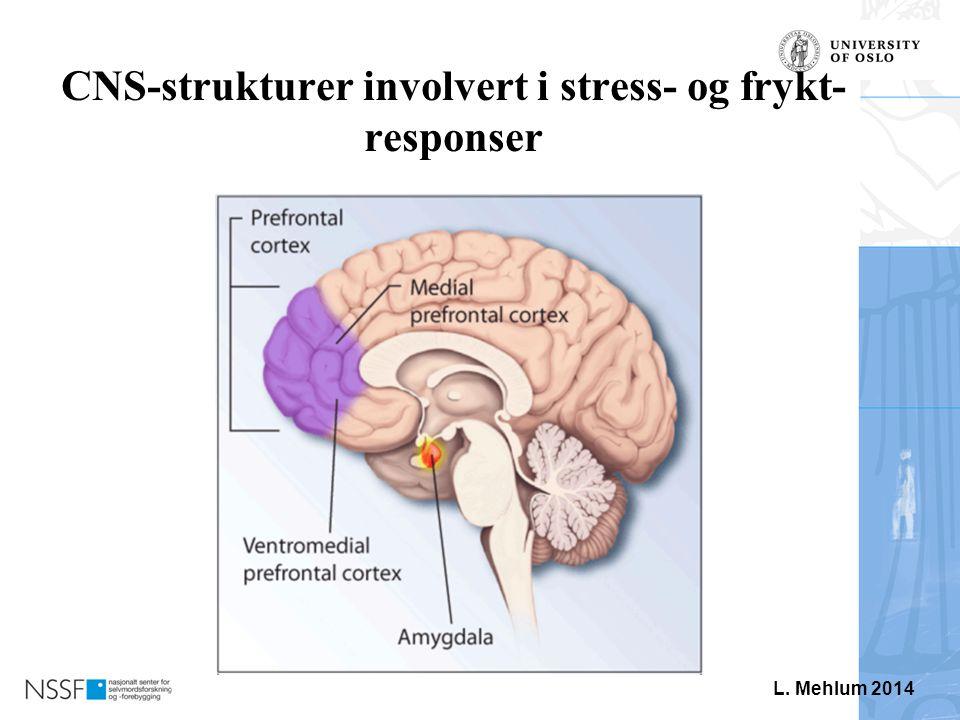 CNS-strukturer involvert i stress- og frykt-responser