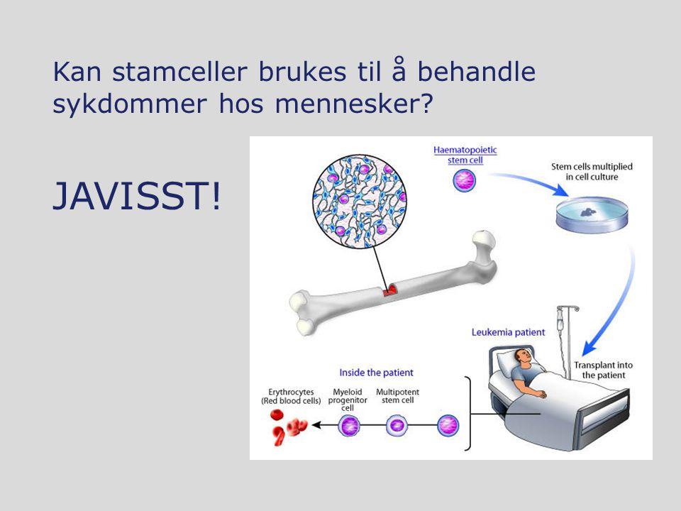 Kan stamceller brukes til å behandle sykdommer hos mennesker