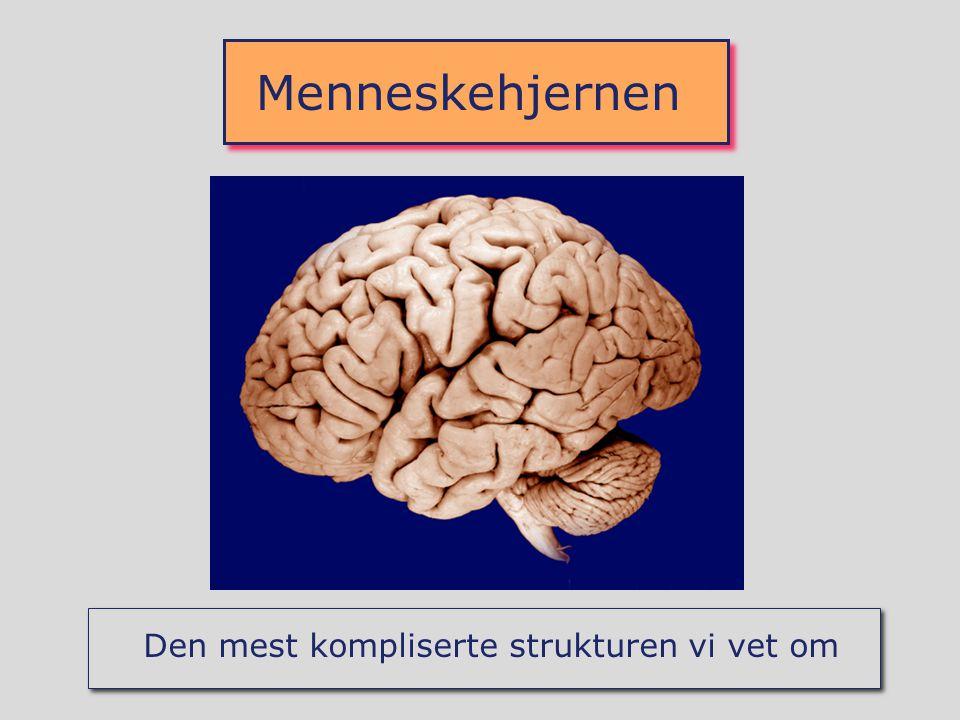 Menneskehjernen Den mest kompliserte strukturen vi vet om