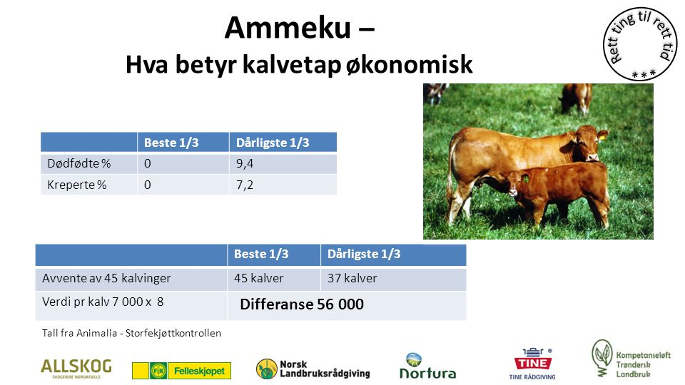 Ammeku – Hva betyr kalvetap økonomisk