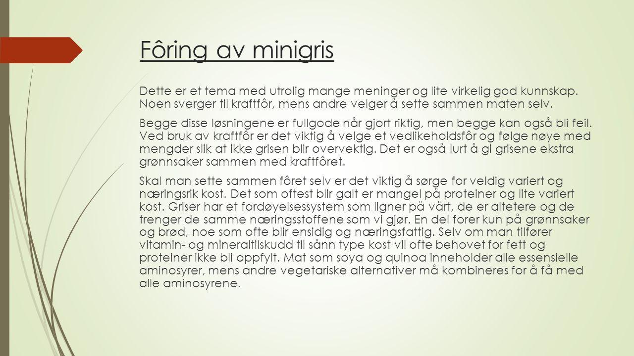 Fôring av minigris