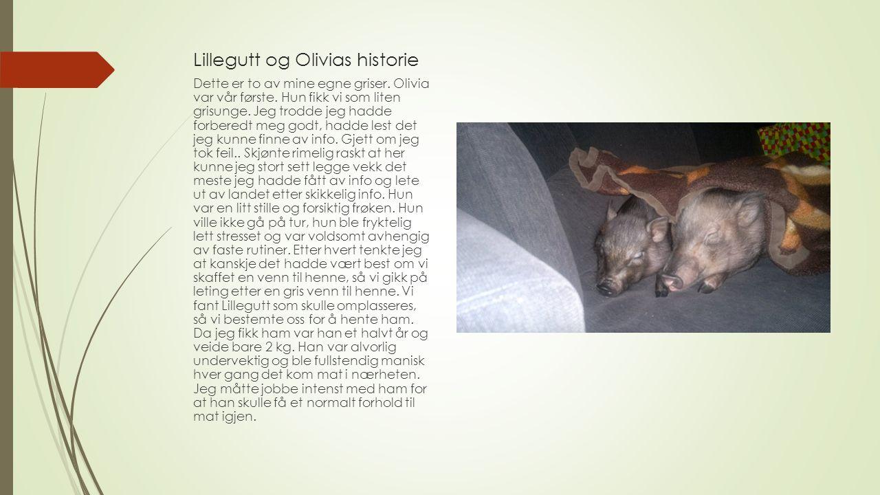 Lillegutt og Olivias historie