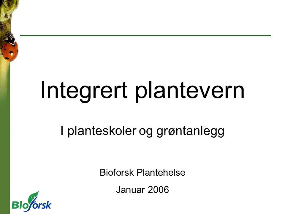 I planteskoler og grøntanlegg Bioforsk Plantehelse Januar 2006