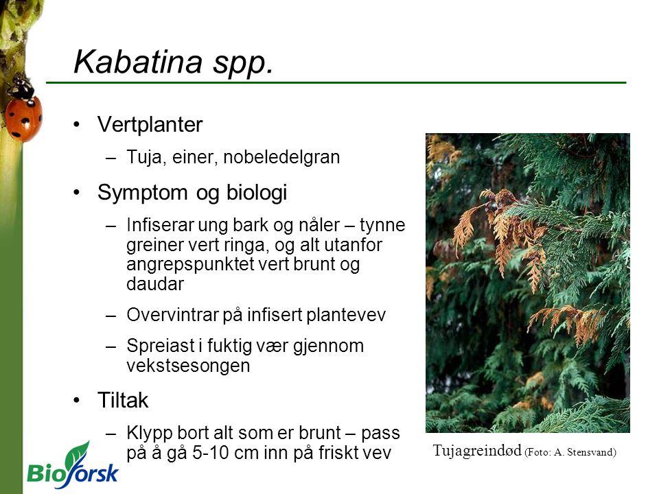 Kabatina spp. Vertplanter Symptom og biologi Tiltak