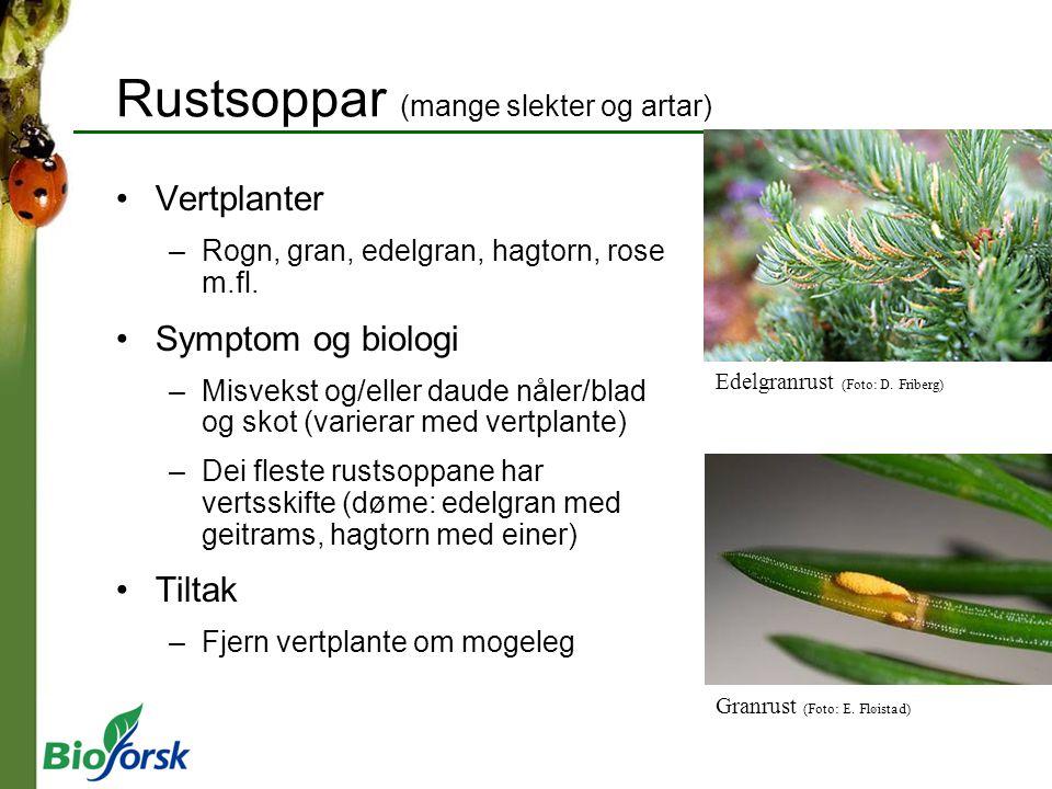 Rustsoppar (mange slekter og artar)