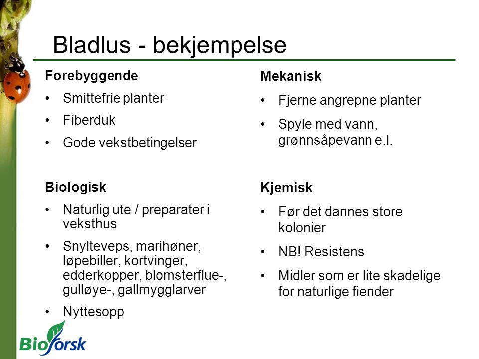Bladlus - bekjempelse Forebyggende Mekanisk Smittefrie planter
