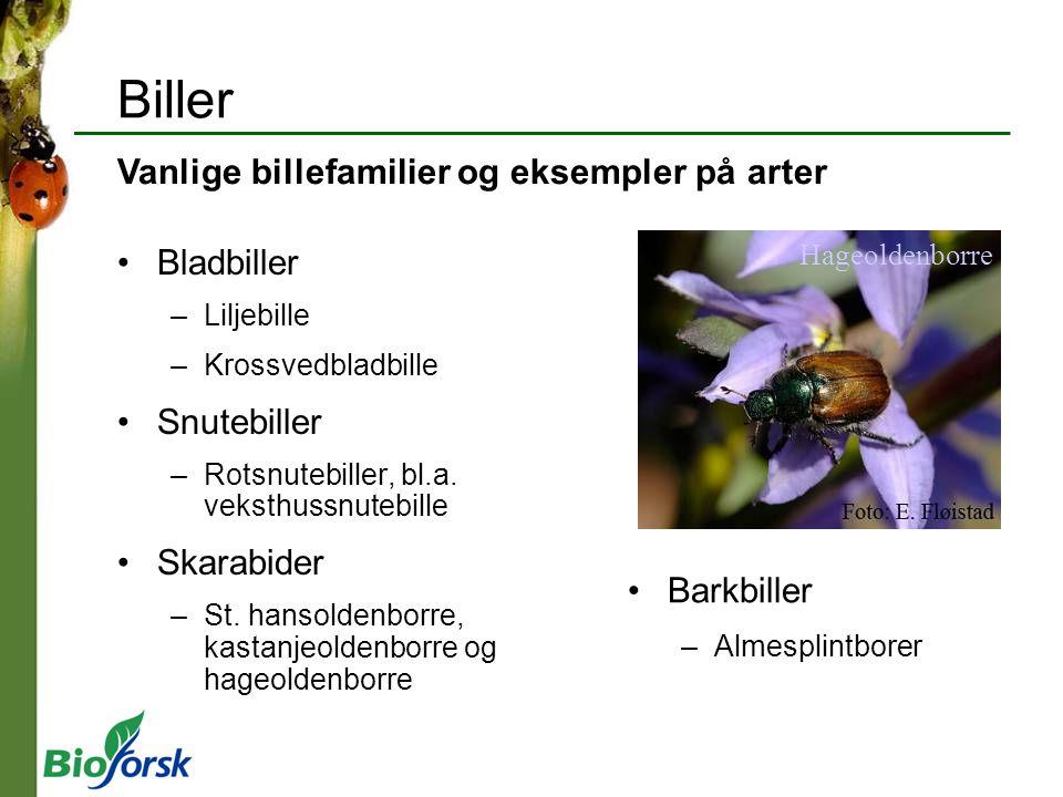 Biller Vanlige billefamilier og eksempler på arter Bladbiller