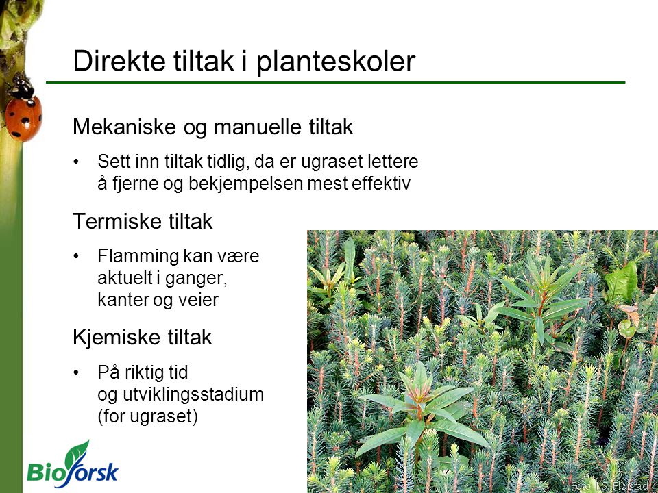 Direkte tiltak i planteskoler