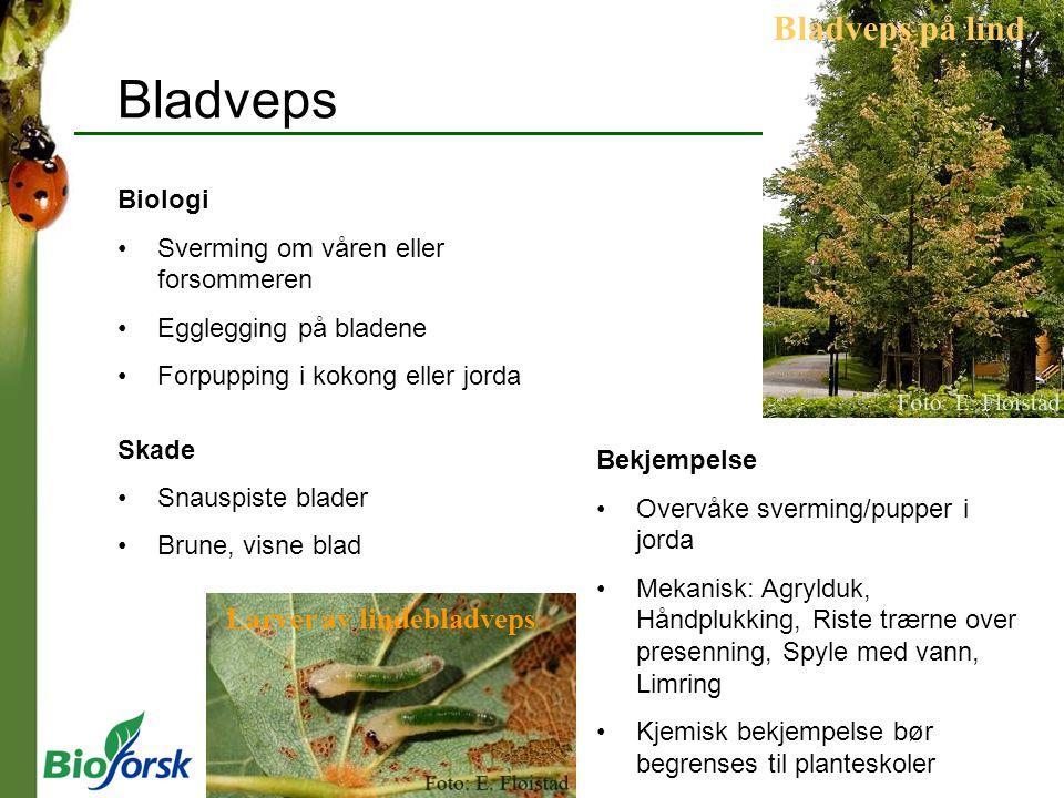 Bladveps Bladveps på lind Larver av lindebladveps Biologi