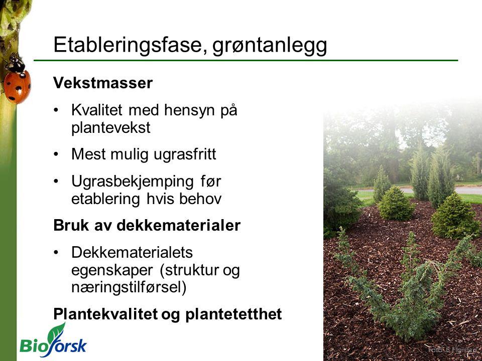 Etableringsfase, grøntanlegg