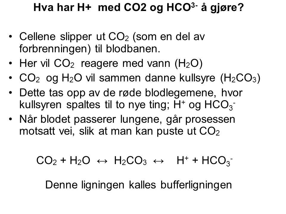 Hva har H+ med CO2 og HCO3- å gjøre