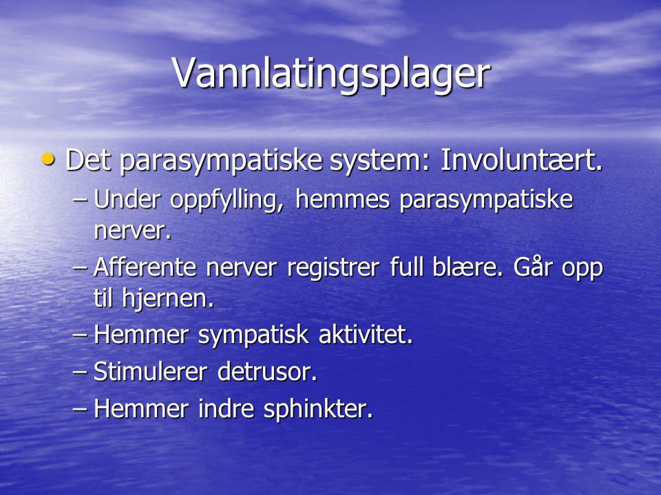 Vannlatingsplager Det parasympatiske system: Involuntært.