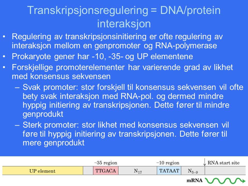 Transkripsjonsregulering = DNA/protein interaksjon
