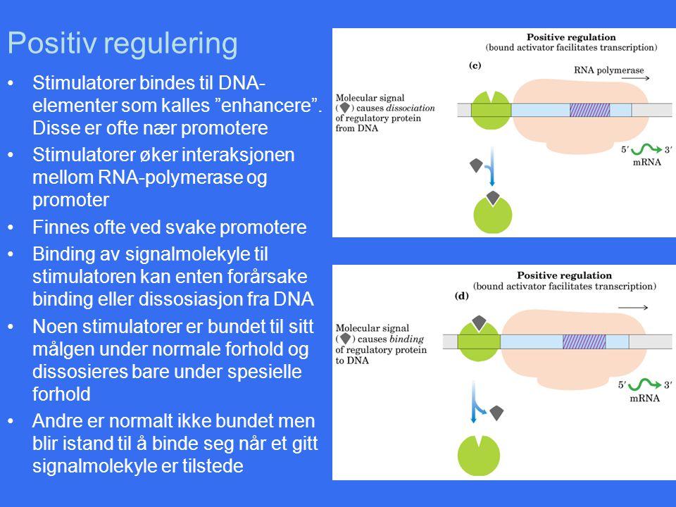 Positiv regulering Stimulatorer bindes til DNA-elementer som kalles enhancere . Disse er ofte nær promotere.