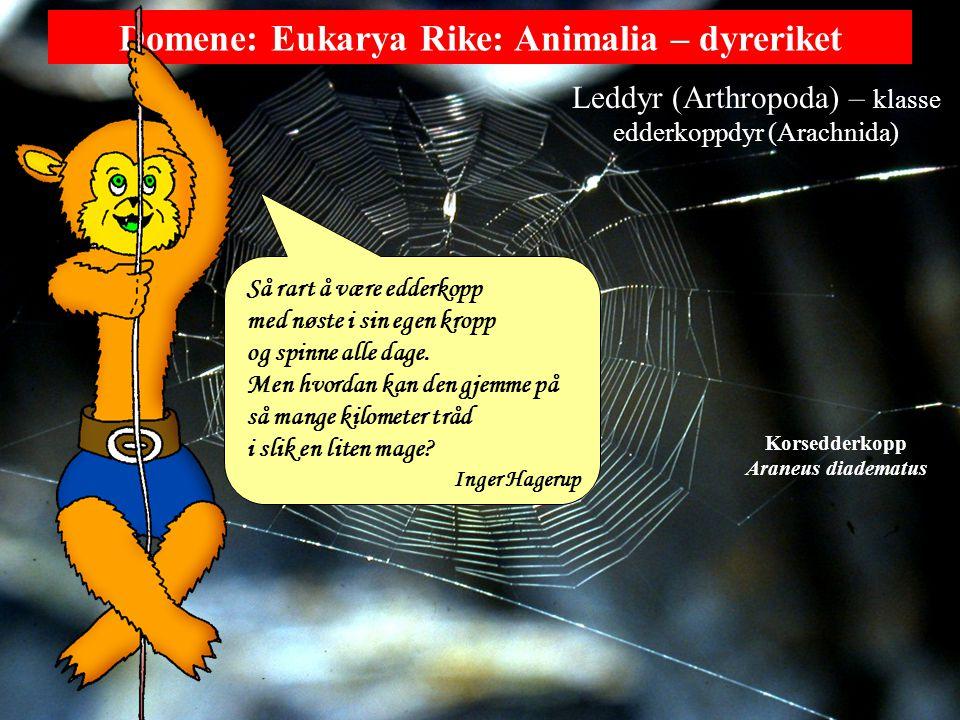 Leddyr (Arthropoda) – klasse edderkoppdyr (Arachnida)