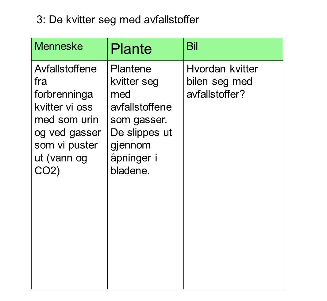Plante 3: De kvitter seg med avfallstoffer Menneske Bil