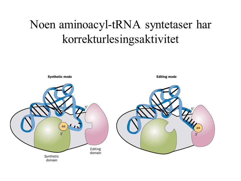 Noen aminoacyl-tRNA syntetaser har korrekturlesingsaktivitet