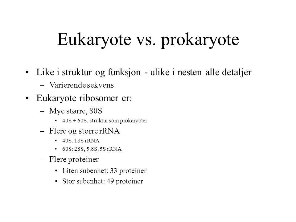 Eukaryote vs. prokaryote