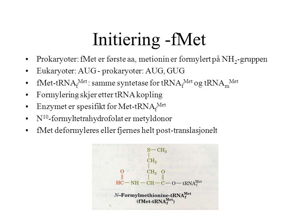 Initiering -fMet Prokaryoter: fMet er første aa, metionin er formylert på NH2-gruppen. Eukaryoter: AUG - prokaryoter: AUG, GUG.