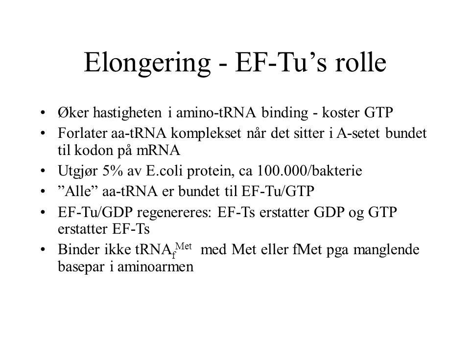 Elongering - EF-Tu's rolle