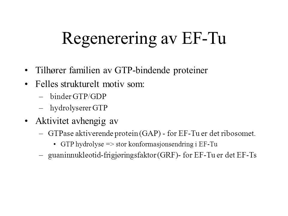 Regenerering av EF-Tu Tilhører familien av GTP-bindende proteiner