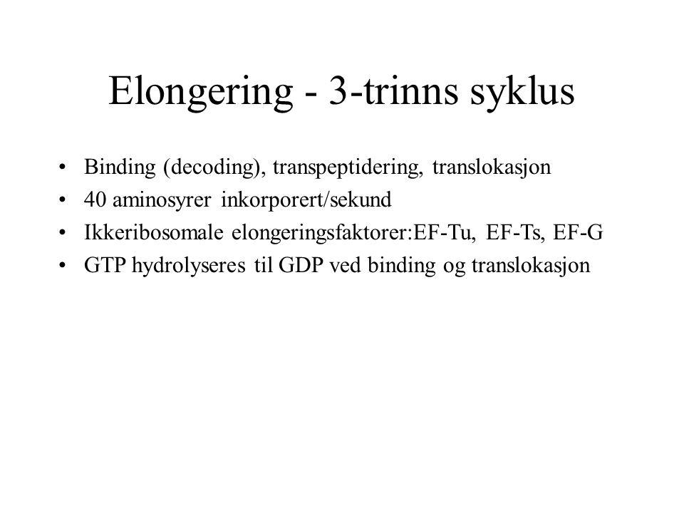 Elongering - 3-trinns syklus