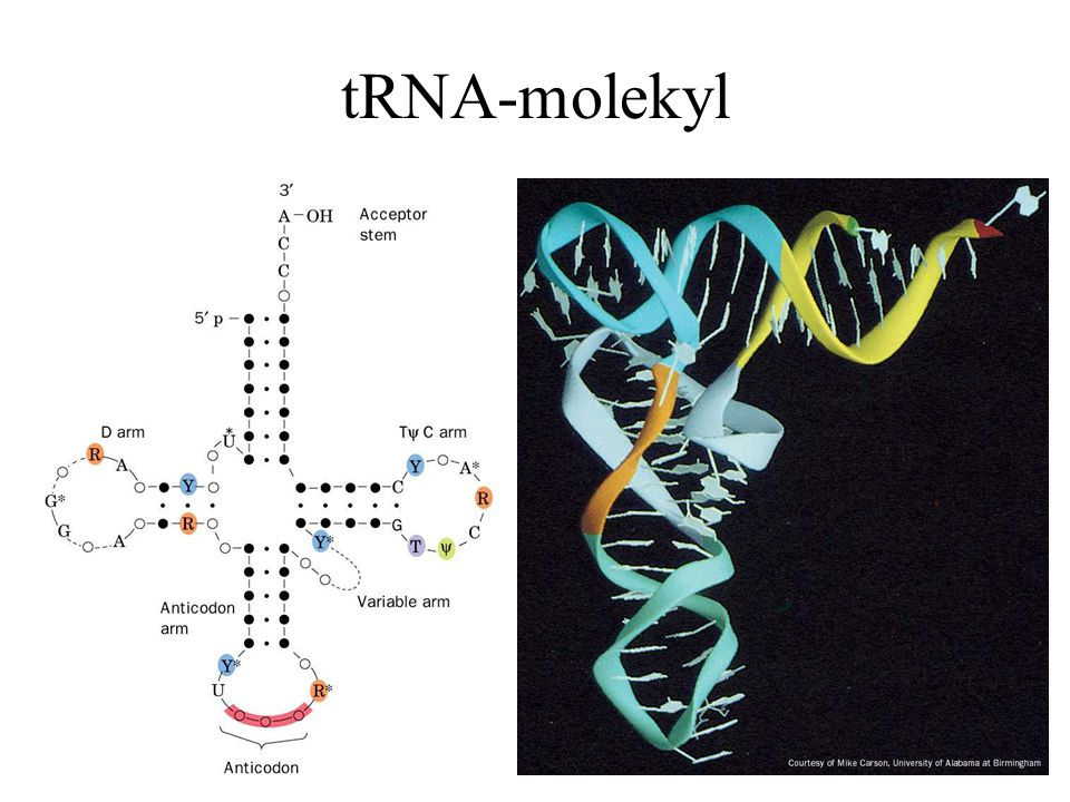 tRNA-molekyl