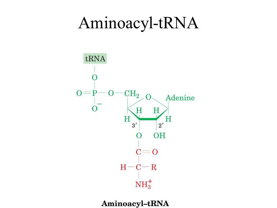 Aminoacyl-tRNA