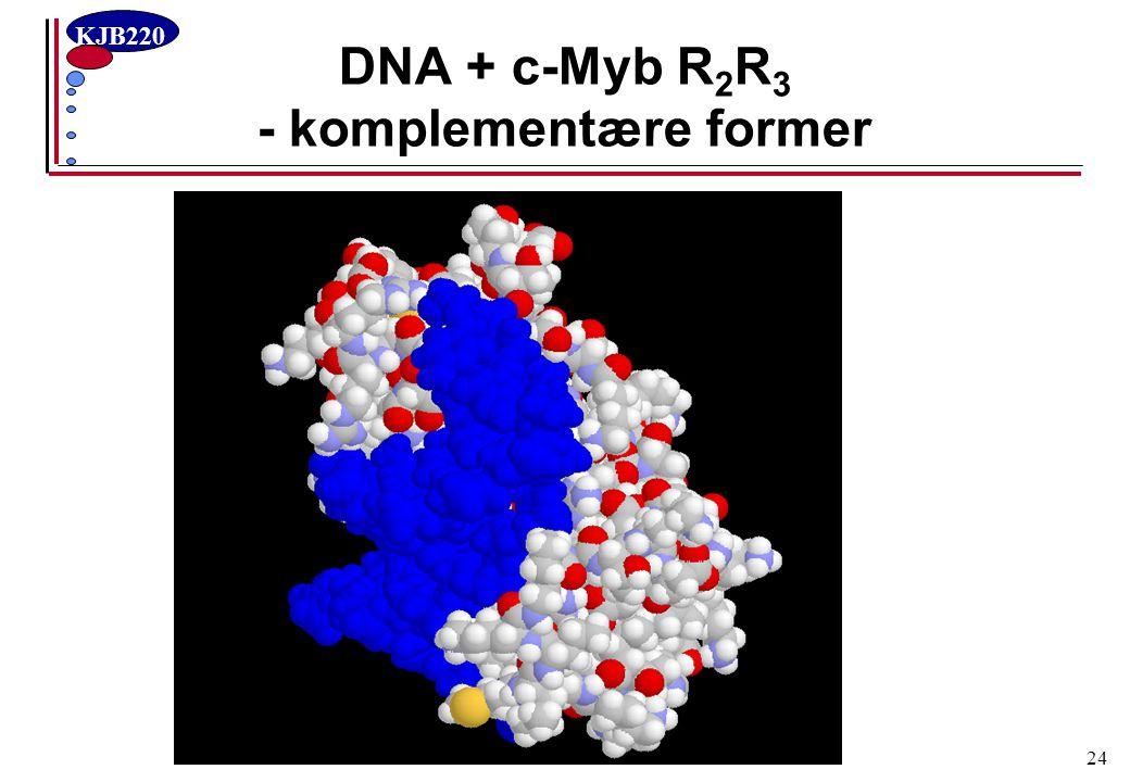 DNA + c-Myb R2R3 - komplementære former