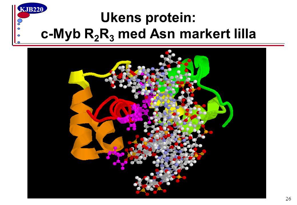 Ukens protein: c-Myb R2R3 med Asn markert lilla
