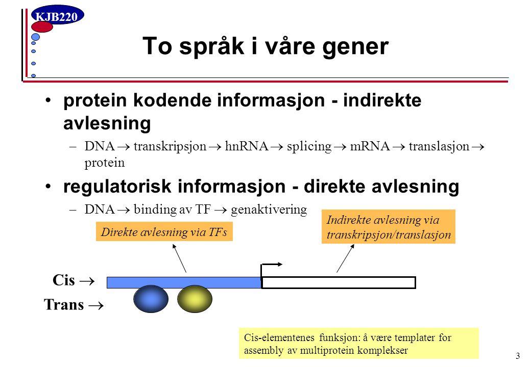 To språk i våre gener protein kodende informasjon - indirekte avlesning. DNA  transkripsjon  hnRNA  splicing  mRNA  translasjon  protein.