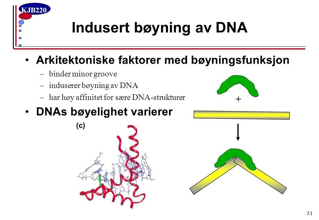 Indusert bøyning av DNA