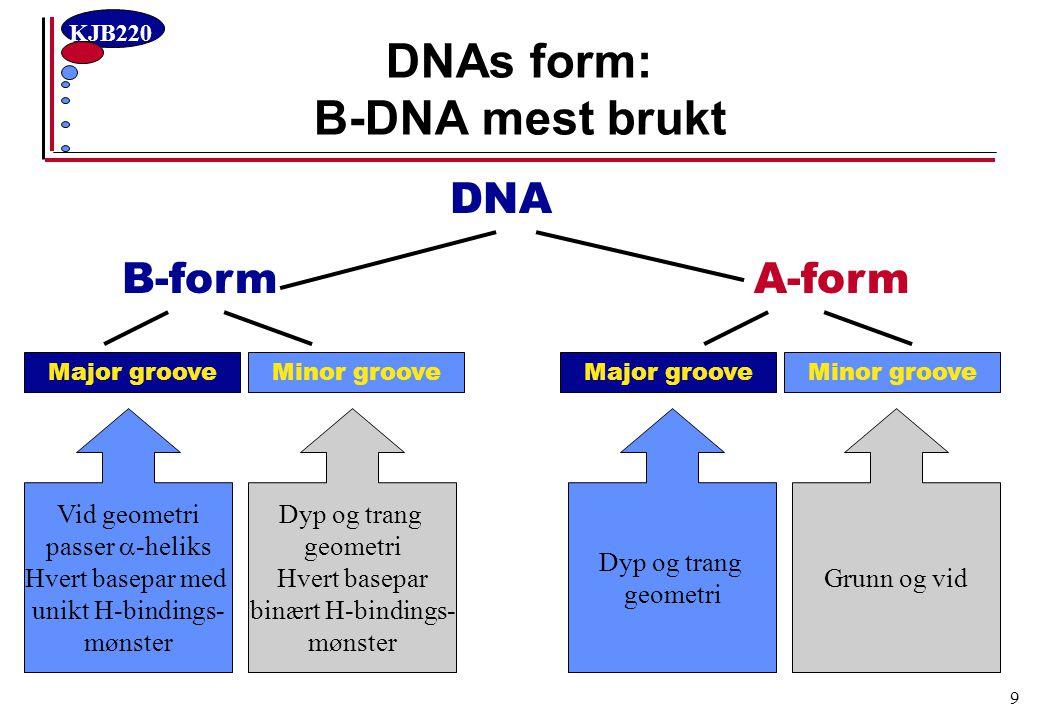 DNAs form: B-DNA mest brukt