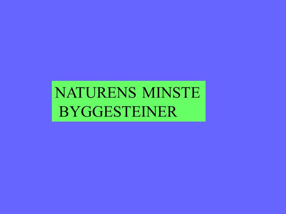 NATURENS MINSTE BYGGESTEINER