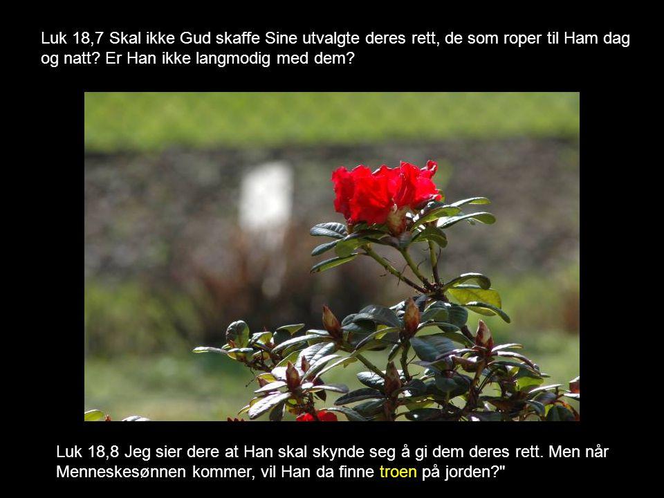 Luk 18,7 Skal ikke Gud skaffe Sine utvalgte deres rett, de som roper til Ham dag og natt Er Han ikke langmodig med dem
