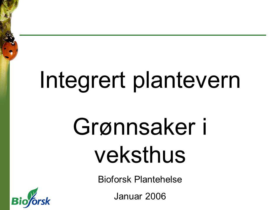 Grønnsaker i veksthus Bioforsk Plantehelse Januar 2006