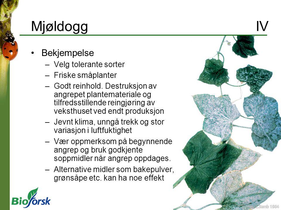 Mjøldogg IV Bekjempelse Velg tolerante sorter Friske småplanter