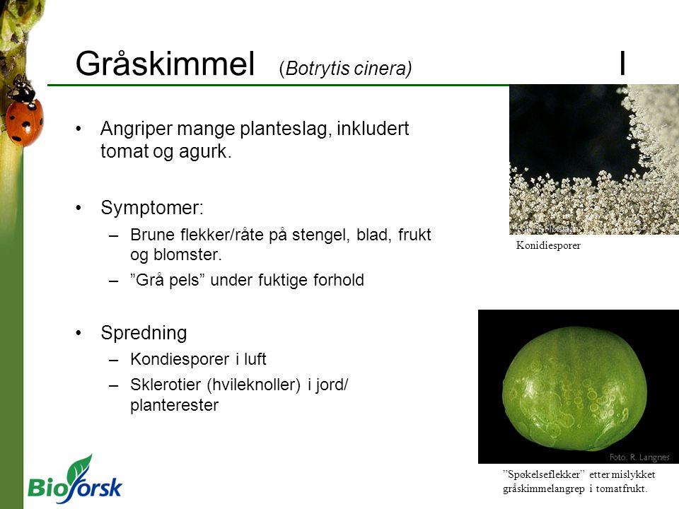 Gråskimmel (Botrytis cinera) I