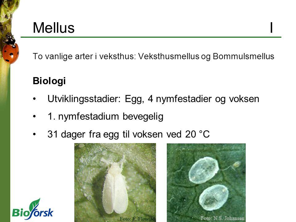 Mellus I Biologi Utviklingsstadier: Egg, 4 nymfestadier og voksen