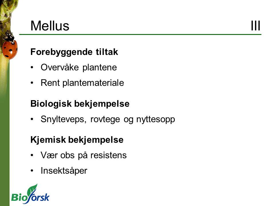 Mellus III Forebyggende tiltak Overvåke plantene Rent plantemateriale