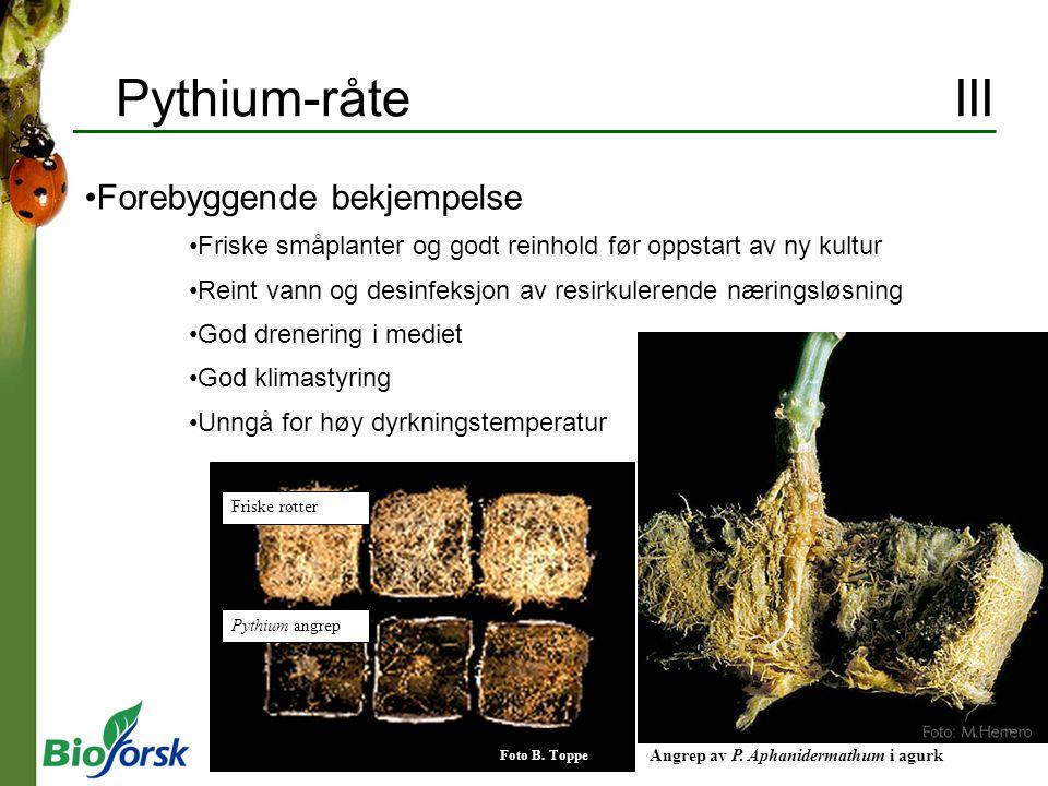Pythium-råte III Forebyggende bekjempelse